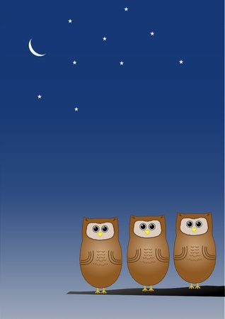 Owls at night photo