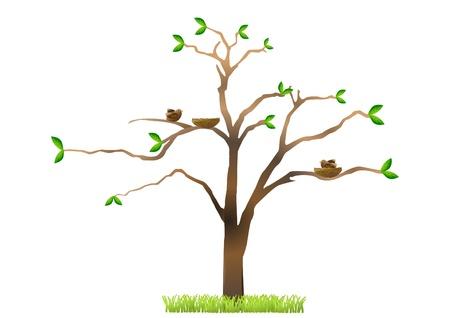 Tree with birds nesting Stock Photo