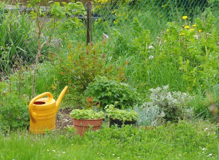 Watering can and plants in garden Stock Photo