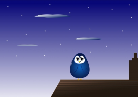 nightime: Owl on rooftop at night