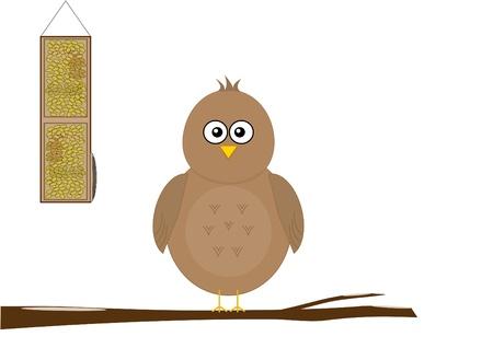 feeder: Cute bird at feeder