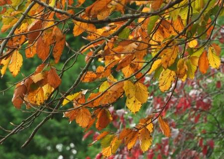 Fall Autumn leaves Stock Photo