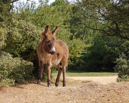 Donkey in forest