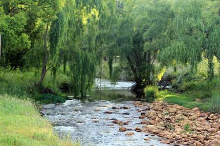 willow: R�o que corre por debajo de los sauces llorones, Somerset West, Sud�frica Foto de archivo
