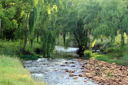 river bed: River running underneath Weeping Willow, Somerset West, South Africa