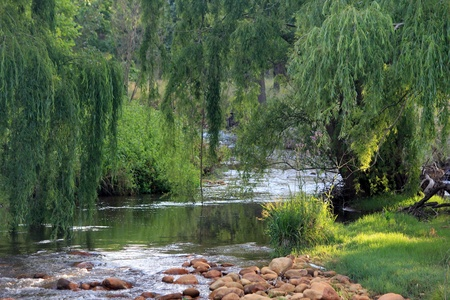river bed: River flowing past willow trees