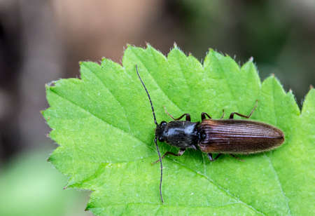 Macrophotography of an insect-beetle
