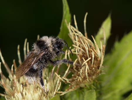 Macrophotography of an insect-hymenoptera