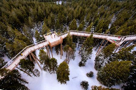 Wooden bridge and observation deck for walking through treetops. Pohorje Treetop Walk, Rogla. Slovenia, Europe
