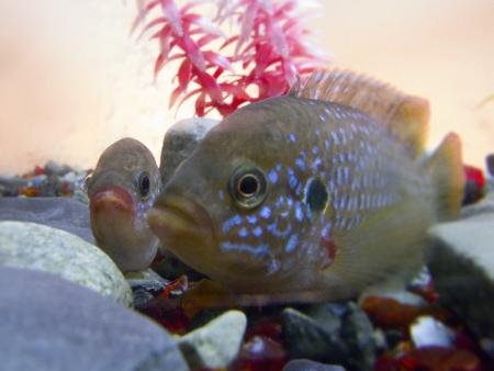 fish tank: Acuario, pescados tropicales Foto de archivo