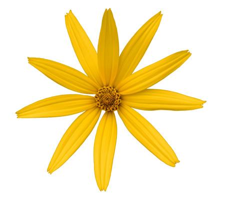 分離された黄色のデイジーの白い背景