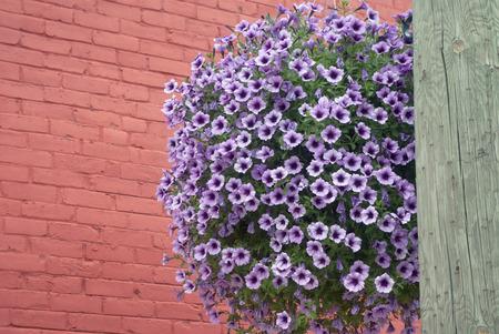 flower basket: flower basket outside street decoration