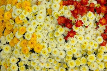 많은 흰색 노란색과 붉은 꽃 이미지를 작성