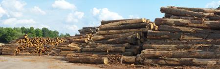 sawmill yard  logs woodpiles stacks