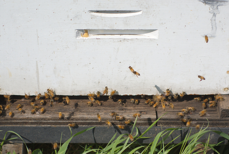 pollination: white beehive at the farm for pollination or honey production