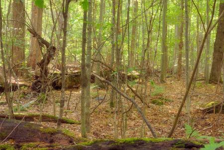 ecosystem: reserva del ecosistema del parque bosque verde entorno de árboles