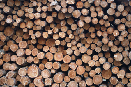 lumber yard wood stack woodpile forest industry material tree background