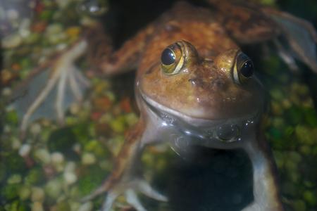 frog wildlife aquatic animal water amphibian Imagens