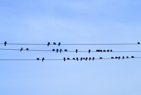 many birds on electric cable blue sky power line