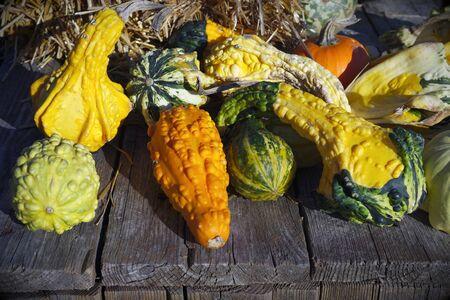 multicolored squashes variety harvest farm vegetables market  Stock Photo