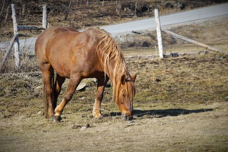 brown horse in field during spring farm mammal rural scene with road Stock Photo