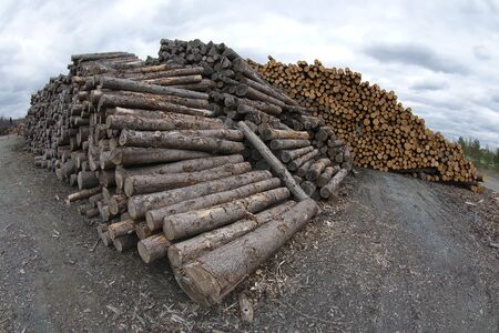 timber wood stack yard forestry industry woodpile log wide angle Stock Photo