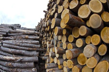timber wood yard forestry industry woodpile log stack