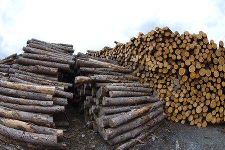 wood stack trunk forest industry wide angle timber heap Stock Photo