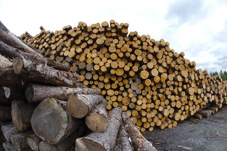 timber logs stack cord wood forest industry forestry cutting trees