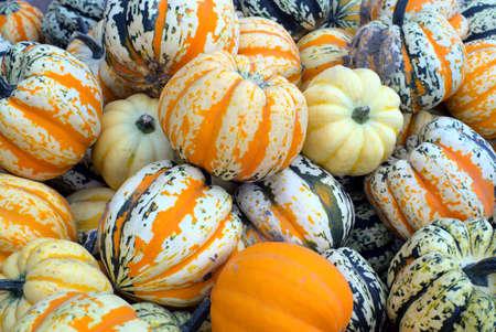 small pumpkins thanksgiving halloween decorations squash