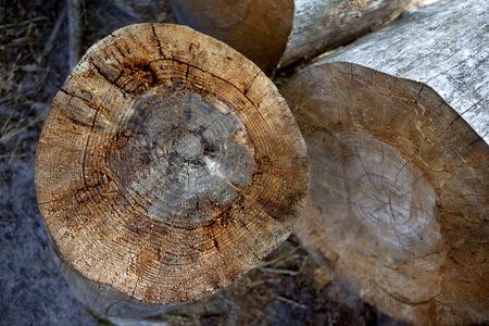lumberman: Tree trunks cut in the forest