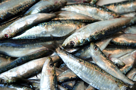 fishmonger: Sardine in a fishmonger shop