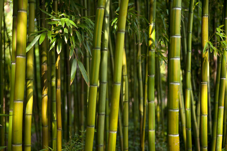 Bamboe bos in een Chinese tuin Stockfoto