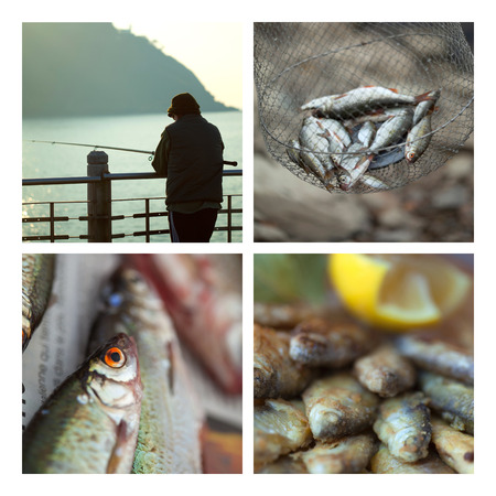 fisher animal: Fishes and fisher man on a collage