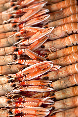 fish shop: Close up on langoustines on a stall in a fish shop