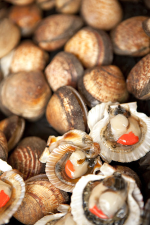 fish shop: Shells and clams on a stall in a fish shop