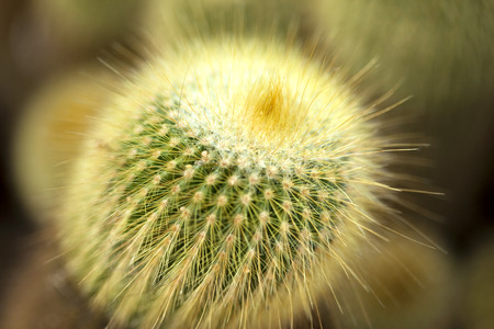 Close up of a cactus in a green house photo