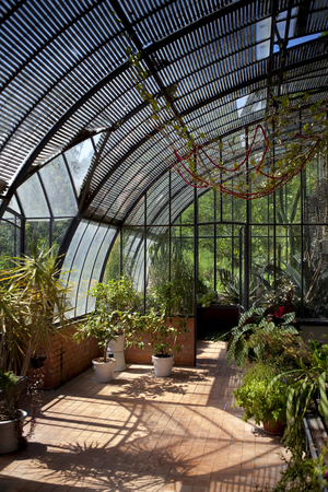 Plants and stylish greenhouse in a garden