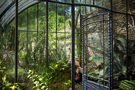 gardening: Plants and flowers in an old stylish greenhouse