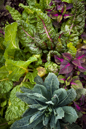 Background of various vegetable in a garden
