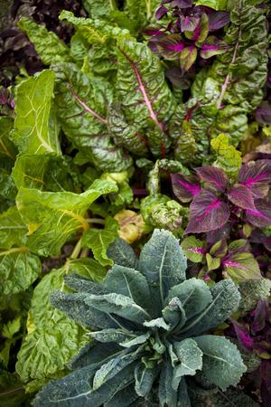 l�gumes verts: Contexte de divers l�gumes dans un jardin