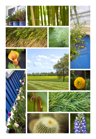 vegatation: Landscapes, parks and flowers on a collage