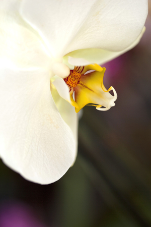 asian gardening: Macro and close up of an orchid in a green house