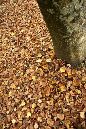 dode bladeren: Stam en dode bladeren in een park in de herfst