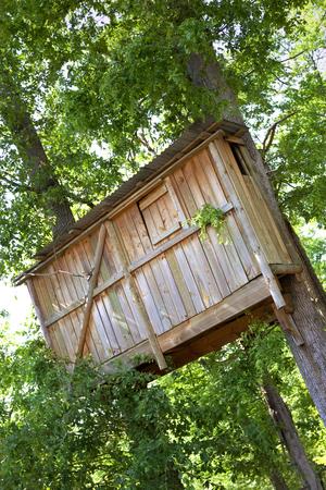 wooden hut: Wooden hut built on oaks in a park