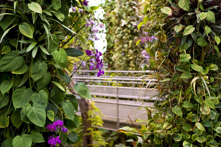 orchid house: Green plants and orchid in a modern green house