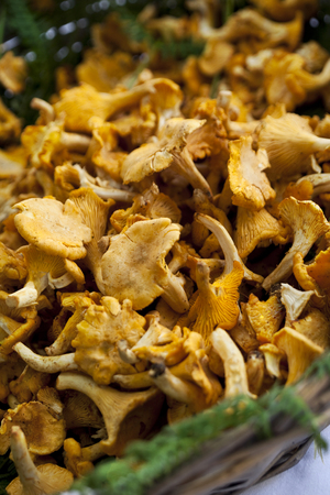 girolle: Girolle mushrooms in a wicket basket on a market stall