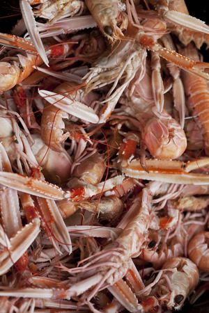scampi: Fresh scampi on the stall in a fish store