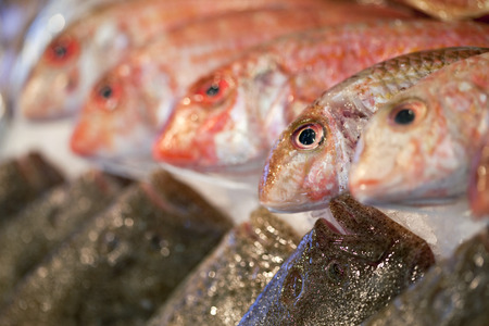 fisher animal: Red mullet and turbot on a stall inside a fish store