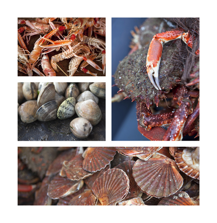 Prawns, shells, crabs and St. Jacques on a collage Stock Photo